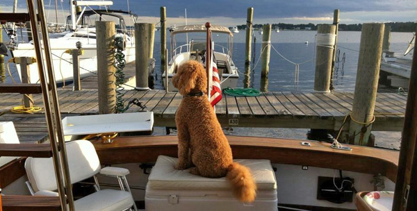 Furry Doggie Customer at Mystic Shipyard